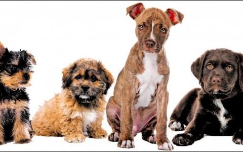 【家庭plus】〈宠物万万岁〉狗狗抗癌餐 加油